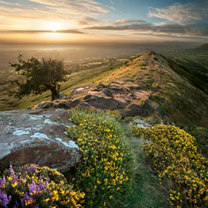 BG_black_hill__gorse1418836003_2496