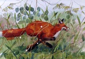 MAR_fox