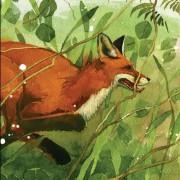 MAR_fox_new_orig