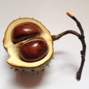Ceramic Horse Chestnut on twig double nut