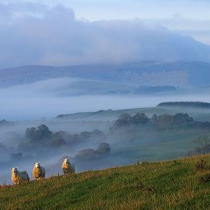 three_sheep_web1320151939_416