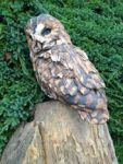 Stoneware Tawny Owl on wooden perch
