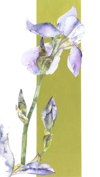 'NEW' Original Watercolour Blue Iris 1