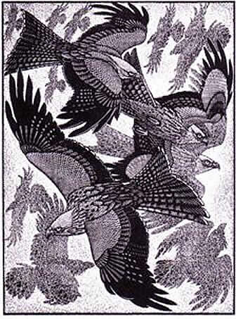 Wood Engraving Red Kites and Ravens