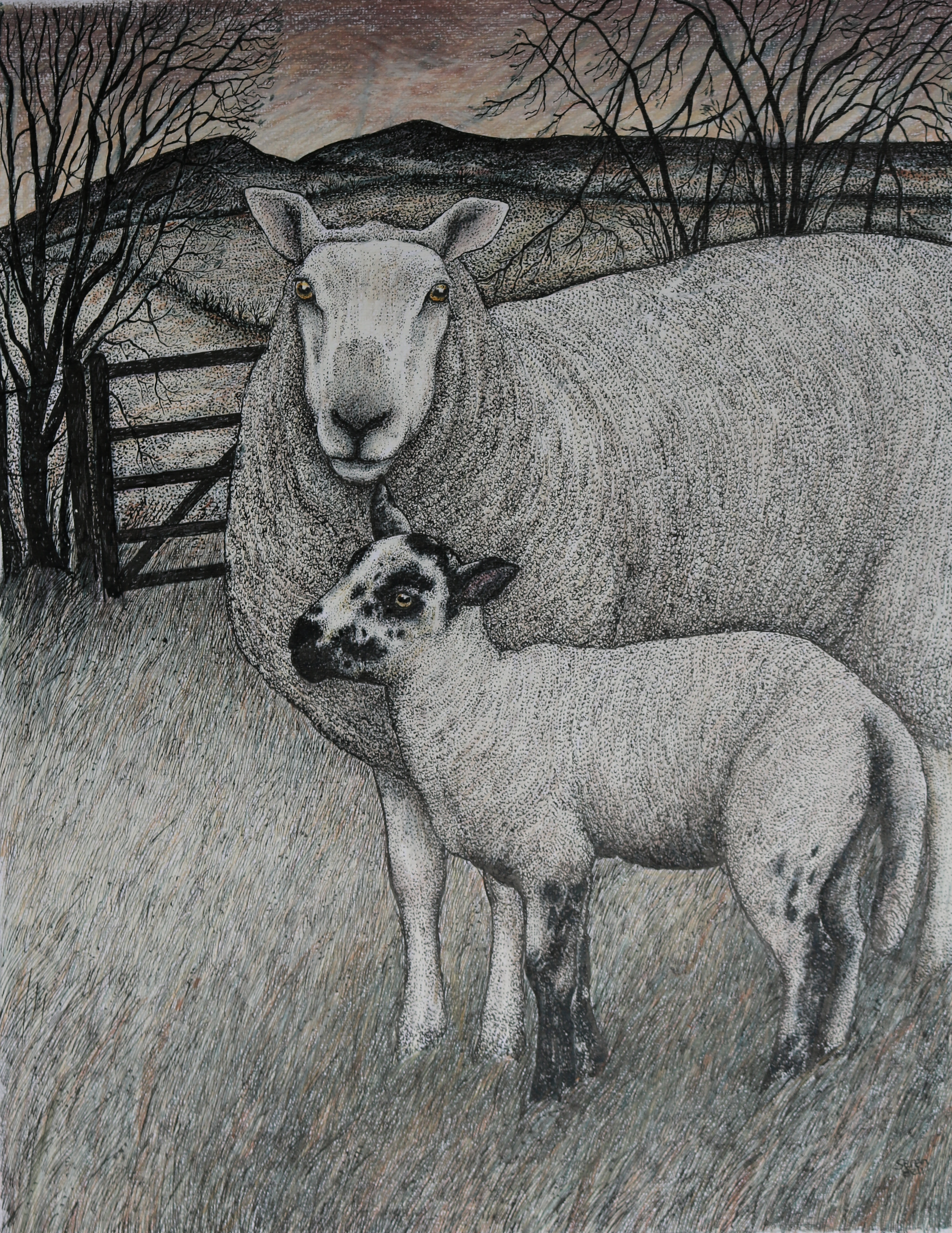 Original pen, ink and coloured pencil 'Early Lamb'