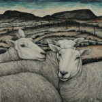 Original pen, ink and coloured pencil 'Lleyn Ewes'