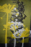 Coloured Monoprint – Queen Anne's Lace and Fern