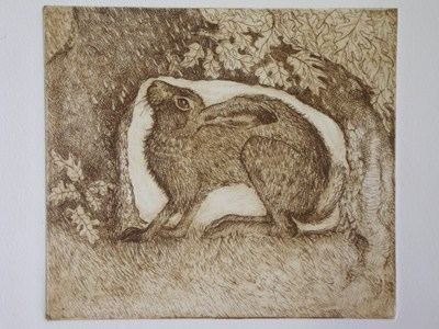 Sheltering Hare Etching