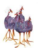 Original watercolour Guinea FowlOriginal watercolour 'Guinea Fowl'