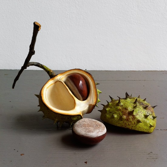 Double nut, lid, shell and twig horse chestnut