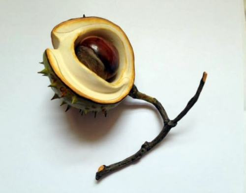 Ceramic Horse Chestnut half shell and nut