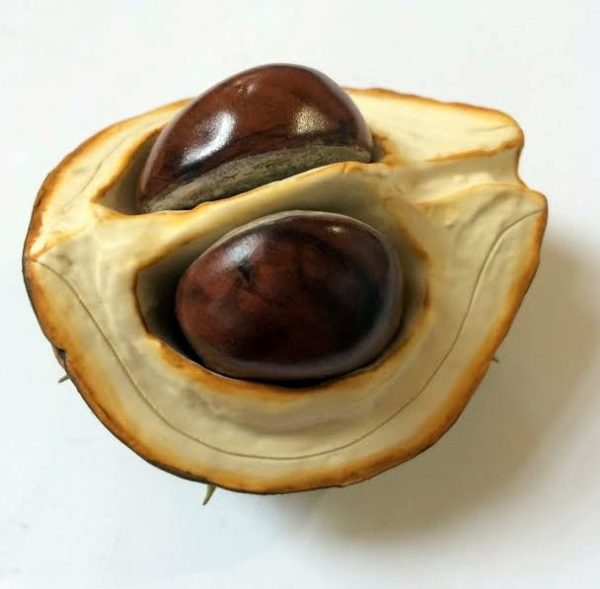 Ceramic Horse Chestnut Lid with Two Nuts