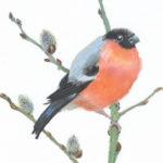Original Watercolour Bullfinch