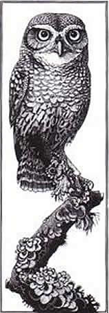 Wood Engraving Little Owl