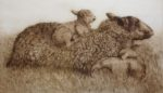 Limited Edition Etching Sheep with Lambs