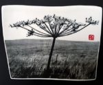 Ceramic Wall Mounted 'Torn Umbellifer' Printed Porcelain