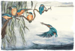 The Lost Words Limited Edition Print Kingfishers