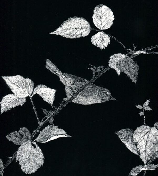 Original Scraper-Board Garden Warblers