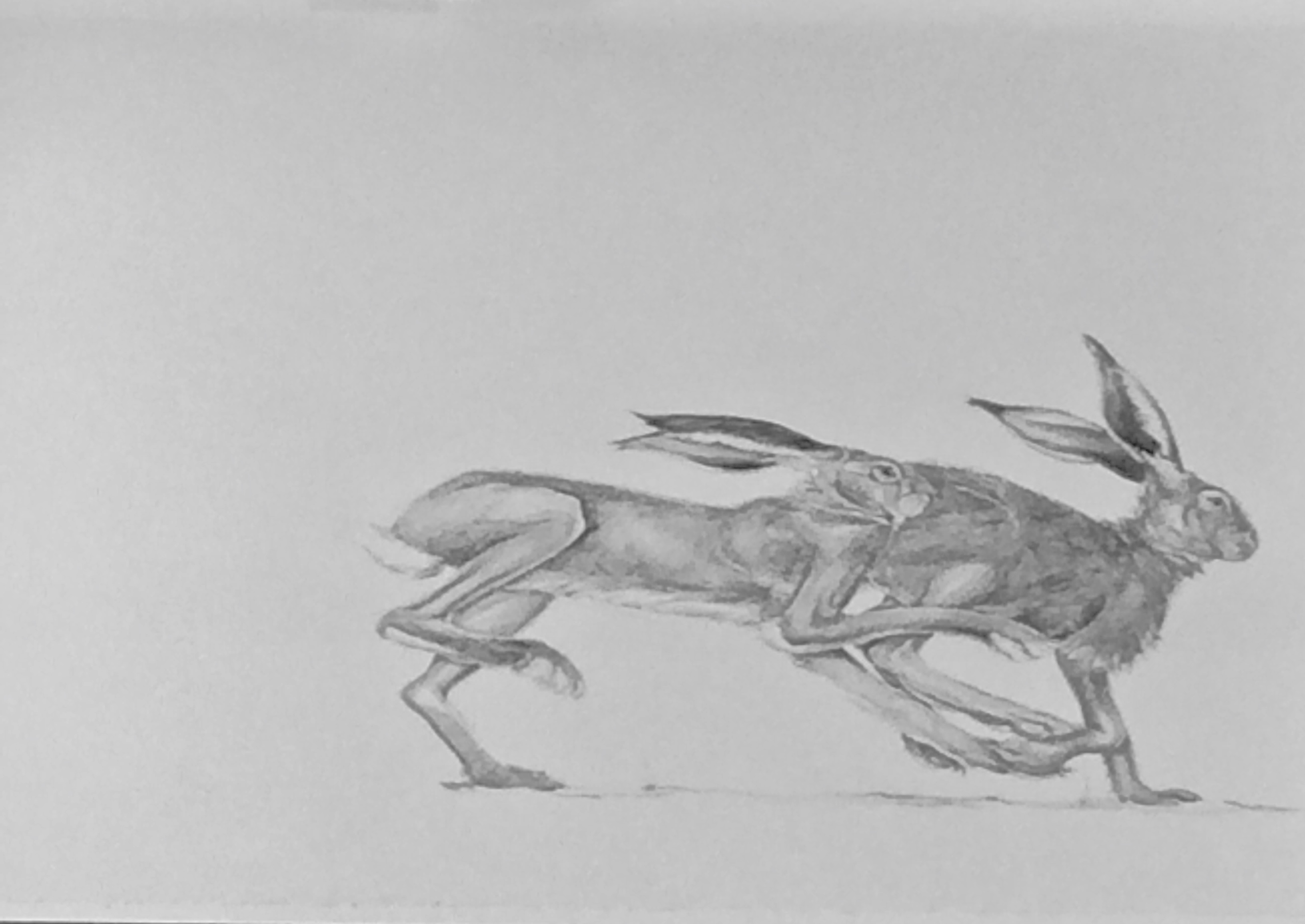 Original pencil drawing counting hares two