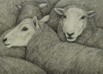Original pen & ink  'Flock'