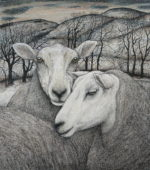 Original pen, ink and coloured pencil  'Midwinter Ewes'