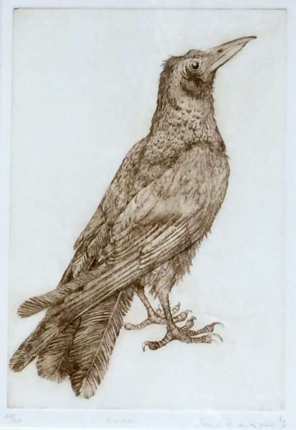 Limited Edition Etching 'Rook'