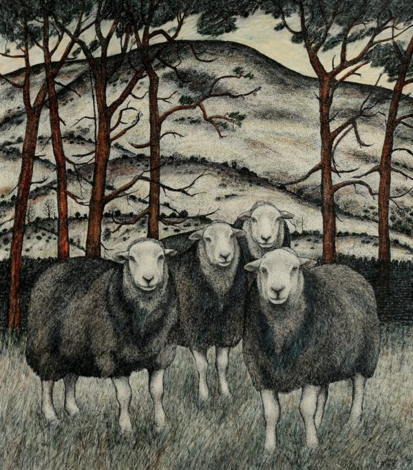 Original pen, ink and coloured pencil  'Herdwicks & Scotspines'