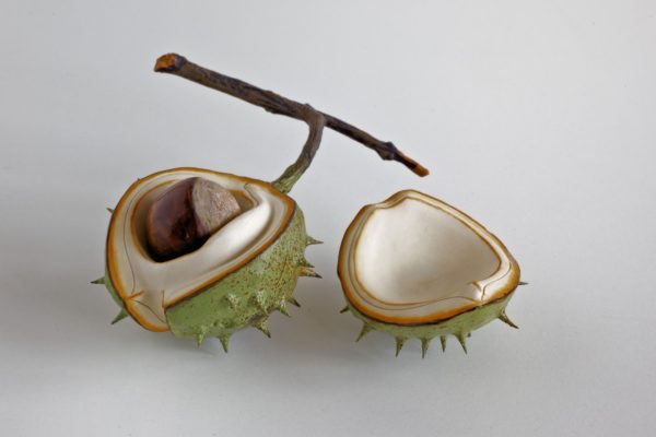 Ceramic Horse Chestnut half shell with a removable nut and lid