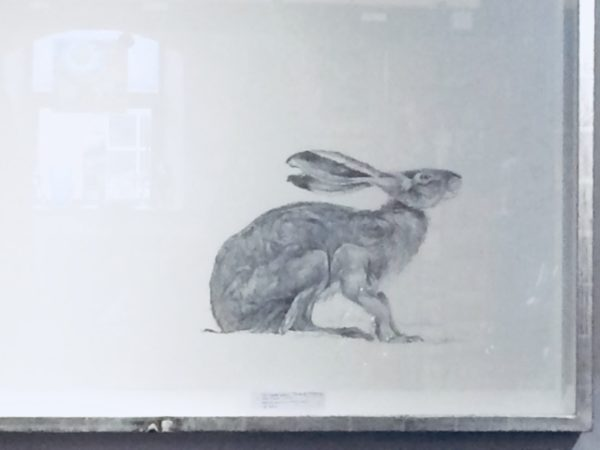 Original Pencil Drawing  'Hare: One'