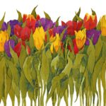Original watercolour  Mixed Tulips
