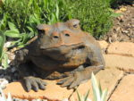 Iron Resin Garden Sculpture Toad