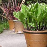 'Shadows On The Grass' Garden Sculpture