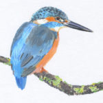 Original Watercolour Kingfisher