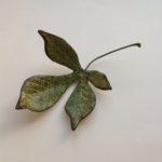 Tiny Horse Chestnut Leaf