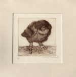 Etching Little Owl