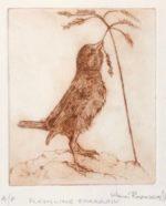 Fledgling Sparrow