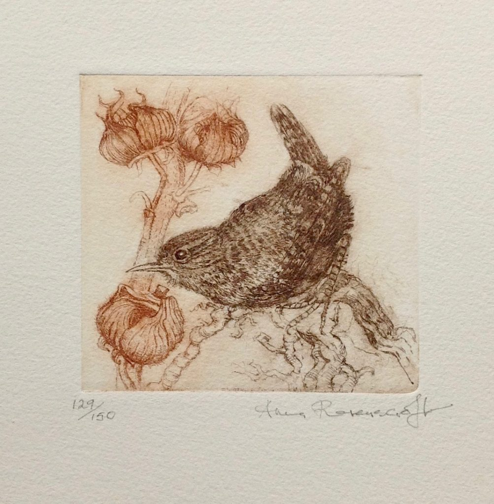 Wren and Seed Heads