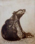Badger Scratching - Etching