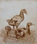 Goslings Etching