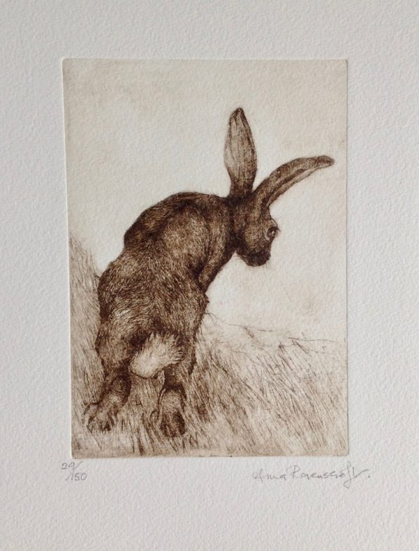 'Hare Looking Down' Etching