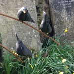 Three Chirpy Blackbirds