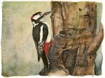 The Lost Spells – Great Spotted Woodpecker