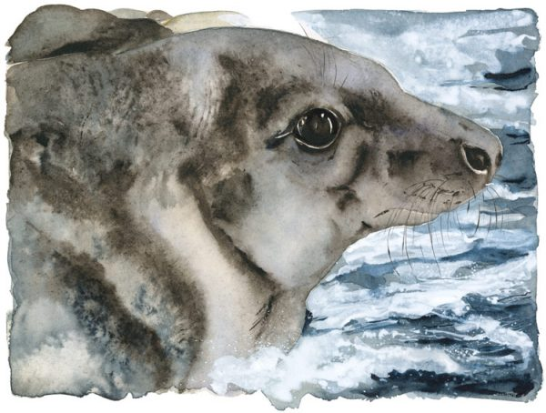 The Lost Spells – Grey Seal